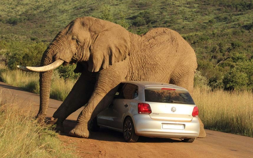 elephant-on-car