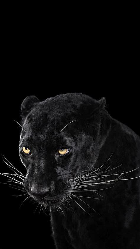 black panther wallpaper iphone wallpaper iphone