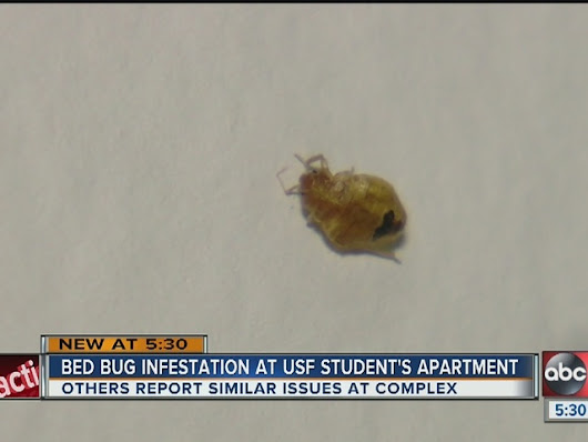 Bed bug infestation keeps USF student sleeping in car, university classroom