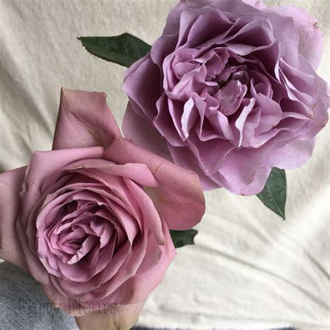 Alexandra Garden Roses   Flirty Fleurs The Florist Blog