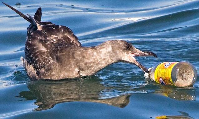 Unsere Ozean versinken im Plastikmüll.