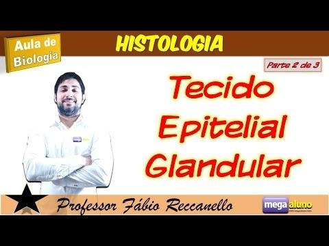 HISTOLOGIA: Tecido Epitelial Glandular