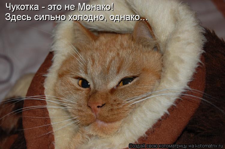 Котоматрица: Чукотка - это не Монако! Здесь сильно холодно, однако...