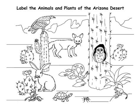 desert coloring pages  coloring pages  kids