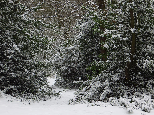 West Heath in the Snow