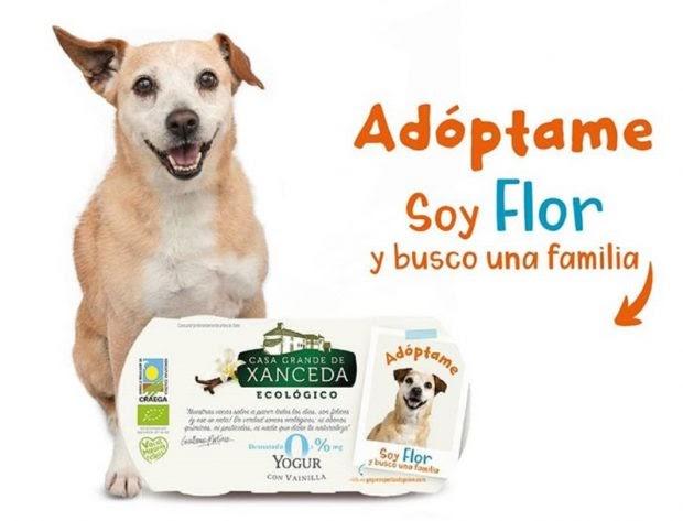 """Perros que buscan un hogar en los yogures """"para que dejen de ser invisibles"""""""