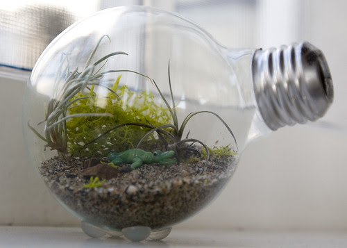 image mini terrarium in a lightbulb tutorial diy wedding favour idea