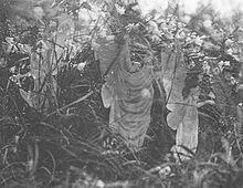 Fairies and Their Sun-Bath, the fifth and last photograph of the Cottingley Fairies