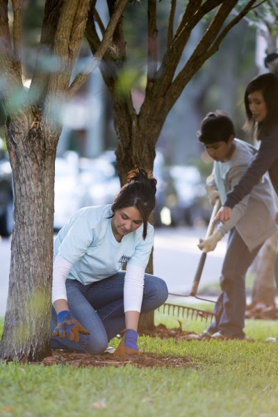 4 Tree Care Tips to Improve Your Property