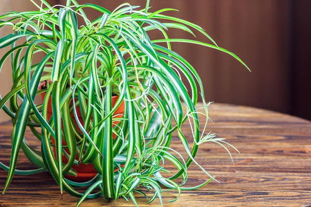 The Best Houseplants to Purify Your Home's Air | DoItYourself.com