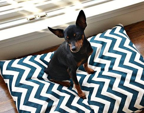 7 Cool Wearables For Pets - InformationWeek