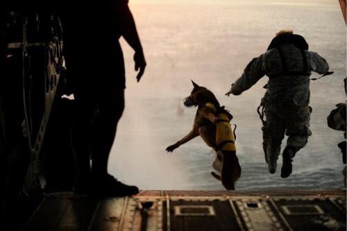 ......navy seals