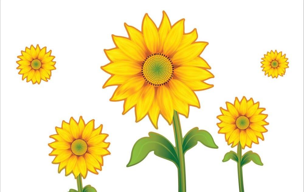 47 Gambar Bunga Matahari Animasi