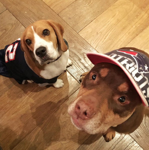 Like most dog parents, Gisele shares pictures of her pups all of the time.