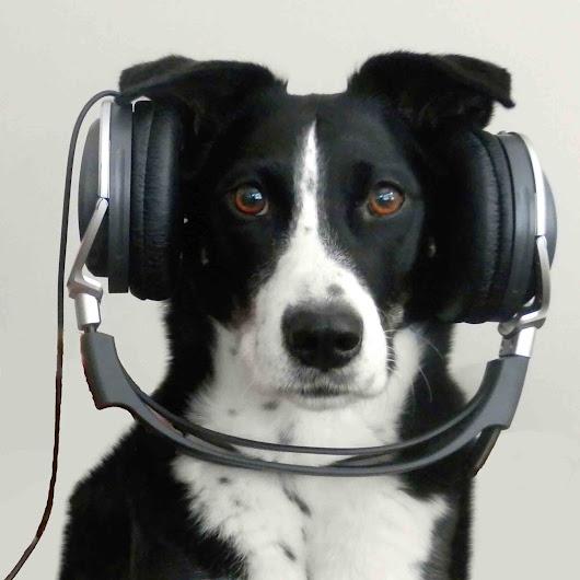 Donna Hill Dog Training Ca