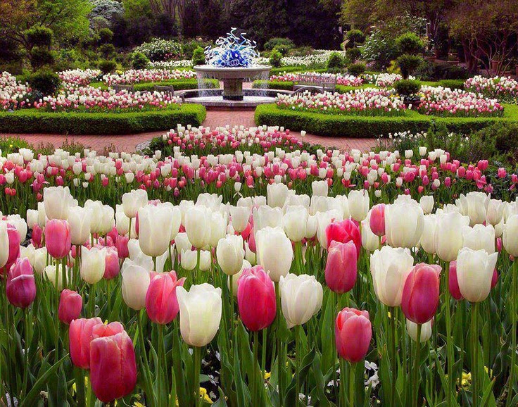 Jardim de tulipas Maravilhoso!  Veja Mais los http://www.comofazer.org