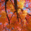 Enjoy the Energy of Fall: Autumn and Traditional Chinese Medicine