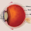 Facts About Age-Related Macular Degeneration | National Eye Institute