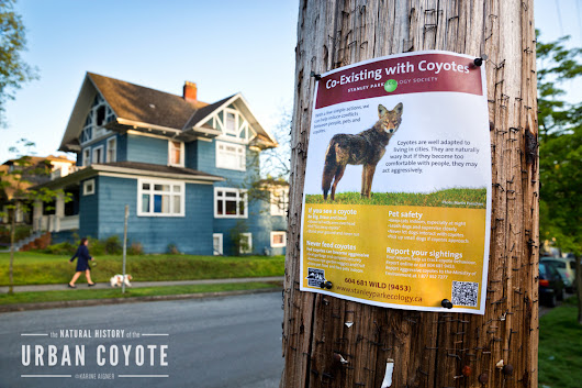 What to do if you encounter a coyote while walking your dog