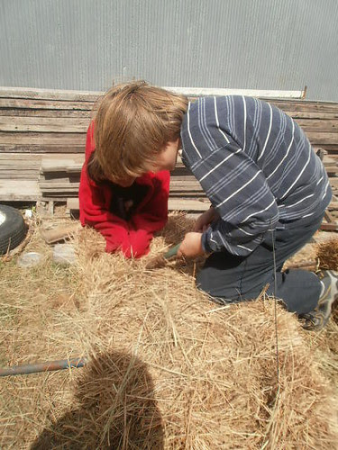 Cutting into a bale