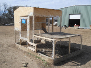 Retrofit Chicken Tractor with Chicken Wire Stapled Back On