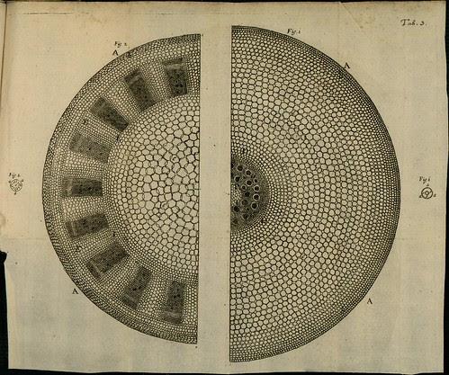 Phytological History 1673 Nehemiah Grew c