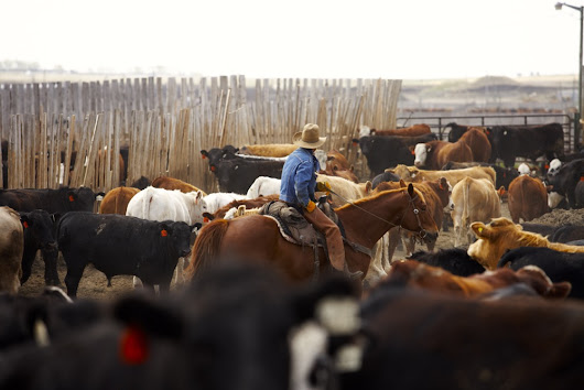 CCA Report: Cultivating relationships for beef producers