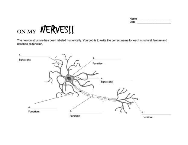 NWNoggin Neuron Worksheet