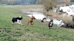 dogs on the run by lekym
