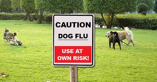 The Dog Flu Epidemic: The Real Truth