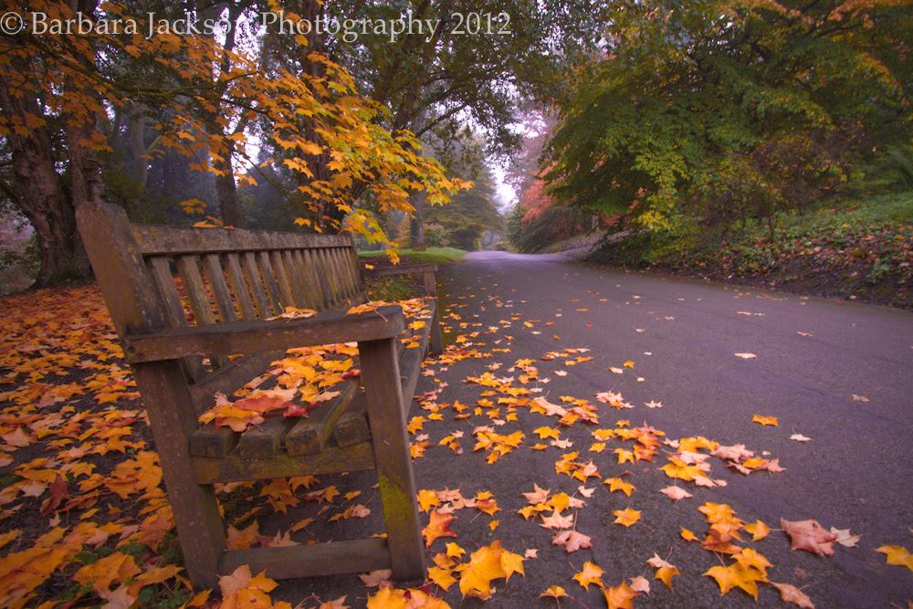 Bench at Batsford