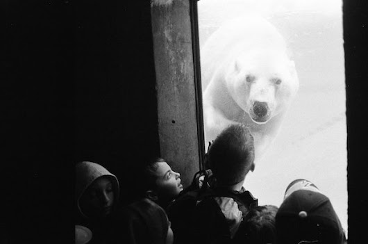 We Animals: Powerful Photos Highlight the Plight of Animals in Captivity