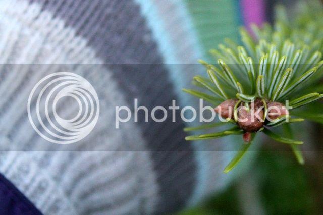 photo glove_zps868b8465.jpg