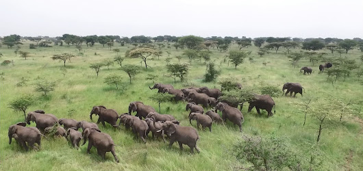 Off-the-shelf hobby drones are helping save elephants in Tanzania