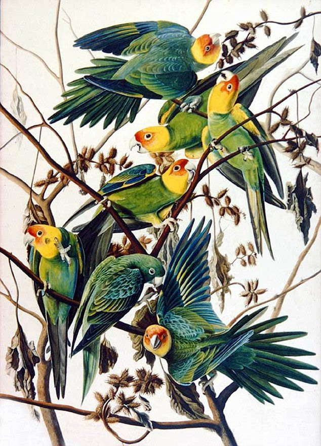 Positioning: Audubon would bend the birds' necks in ways to fit them appropriately in the limited space he had for the books