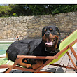 Pool Safety Tips For Pets to Keep Fido Happy & Healthy | The Dogs and Cats Blog 4-Legged.com