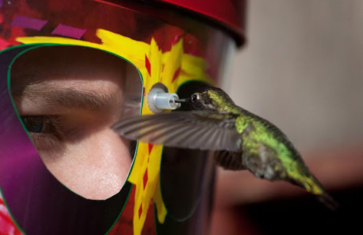 A Hummingbird Feeder That You Wear on Your Face