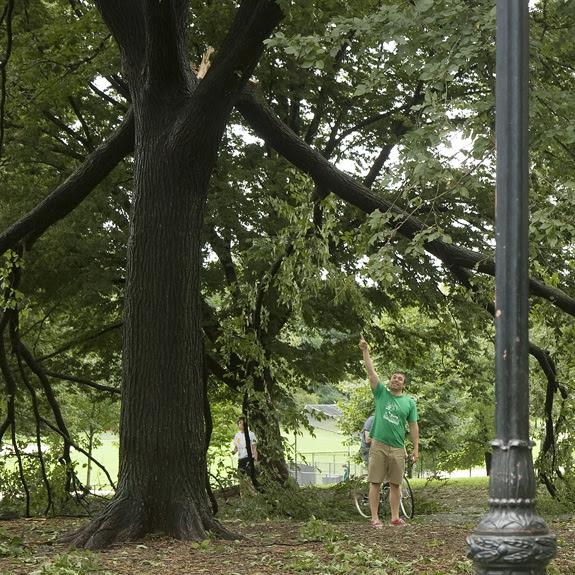 post-Irene in Prospect Park