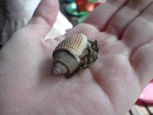 little maximus in his 3rd shell