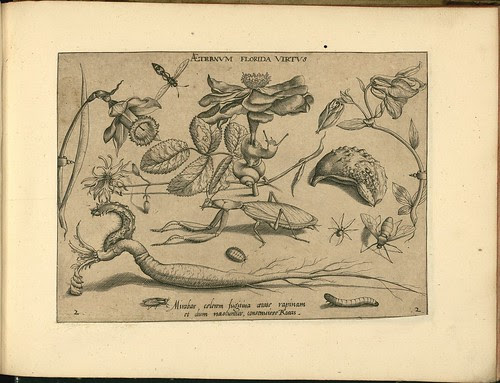 Archetypa studiaque patris - Joris Hoefnagel (1592) e