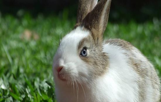 Cuidados para un conejo