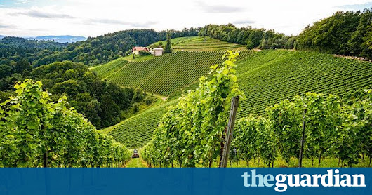 Game of Rhônes | David Williams | Life and style | The Guardian