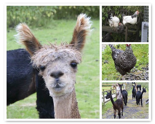 Dove Farm - Animals