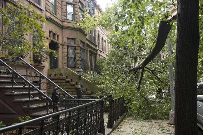 post-Irene on 10th Street, Park Slope