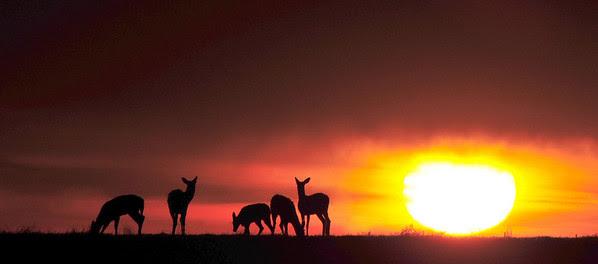 Cooperative Deer
