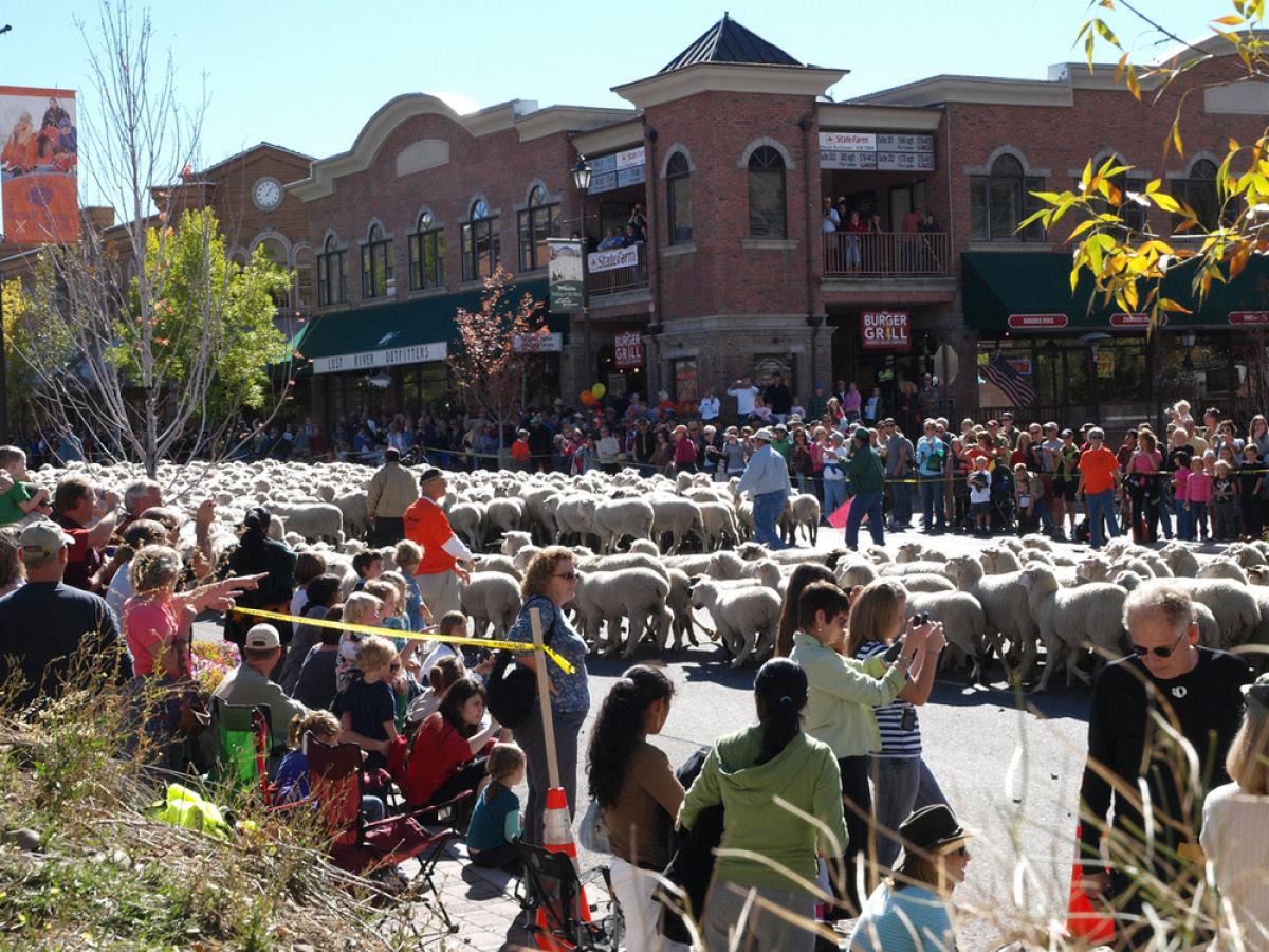 Conheça o Festival de Arrasto de Ovelhas 11