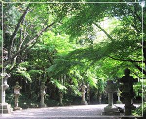 蝉時雨の中の香取神宮。なんとも良い空気。