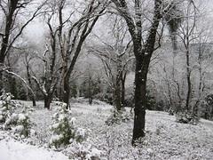 snow January 2008