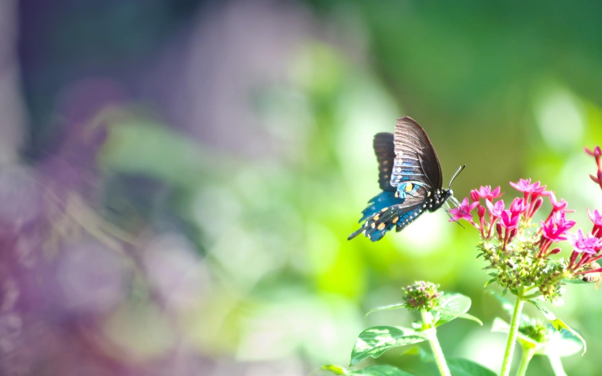 Resultado de imagem para gorgeous butterfly