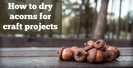 How to dry acorns for craft projects - Mod Podge Rocks
